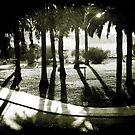 Palm Bosque at Dusk by Ellen Cotton