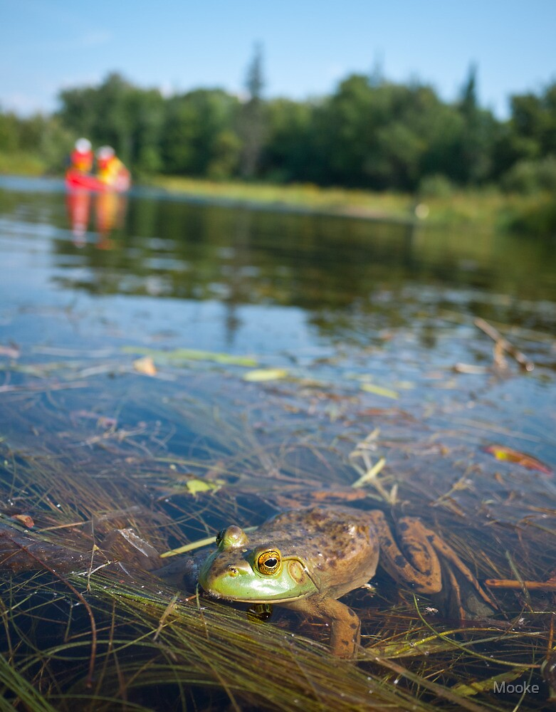 Frog in Algonquin Provincial Park, Ontario, Canada by Mooke