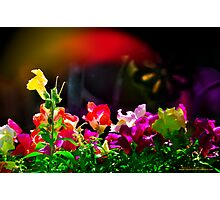 Flash - of Color! Photographic Print