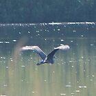 Blue Herring in Flight by theartguy