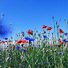 poppy flower no 11 by Falko Follert