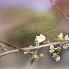 Delicate Spring by Becca7