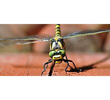 Golden-ringed Dragonfly Photographic Print