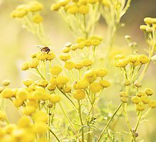 Sunbathing with Tansy by Rosie Nixon