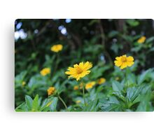 Wild yellow flowers Canvas Print