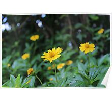 Wild yellow flowers Poster