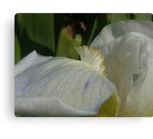 Iris Macro Canvas Print