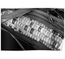 Indian Corn Black and White Poster