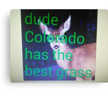 Dude, Colorado has the best grass Canvas Print