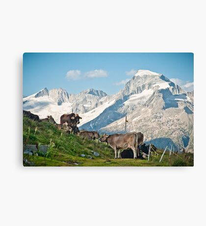 Grazing on top of the world Canvas Print