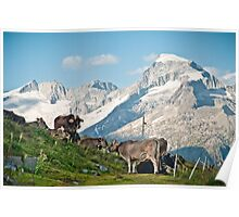 Grazing on top of the world Poster