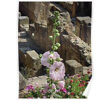 Hollyhocks and History Poster