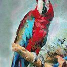 Macaw by PhotosByHealy