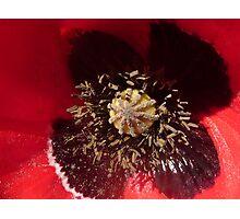Poppy Macro Photographic Print