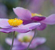anenome by gardenessence