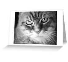 Feline Greeting Card