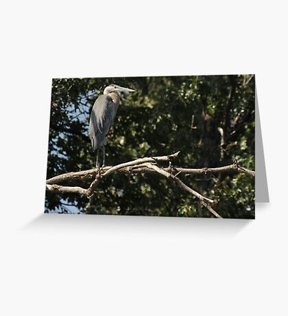 Great Blue Heron on the Wisconsin River Greeting Card