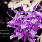Violet Orchids by photecstasy