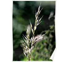 Silvery Grass Poster
