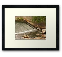 Great Blue Heron Waiting For Fish to Slide Down Framed Print
