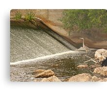 Great Blue Heron Waiting For Fish to Slide Down Metal Print