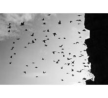 Flying birds Photographic Print