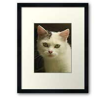 Cats and kittens ,lovers of cats Framed Print