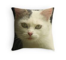 Cats and kittens ,lovers of cats Throw Pillow