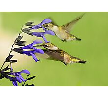 DOUBLE HUMMERS Photographic Print