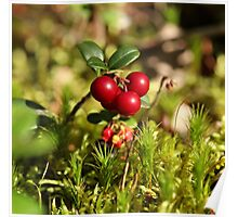 twig cranberries Poster