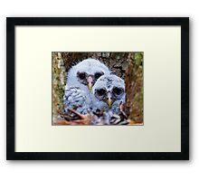 Twin Peeps Framed Print