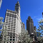 The Wrigely Building Chicago by Adam Kuehl