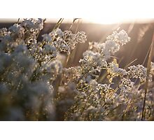 beautiful light Photographic Print