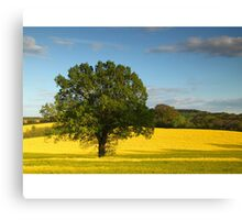 Rapeseed Field, Gomshall, Surrey Canvas Print