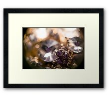 Diamonds and Gold SuperMacro 5 Framed Print