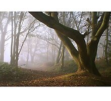 Tree in the Mist, Newlands Corner, Surrey Photographic Print