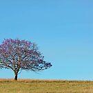 Jacaranda Field - Scenic Rim Qld Australia by Beth  Wode