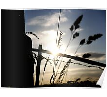 Sun Kissed Grass Poster