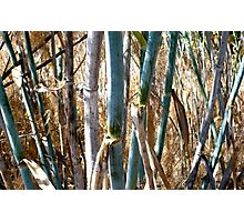 Stems Photographic Print