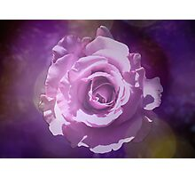 Rose Dream Photographic Print