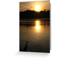 Sunset Duck on banks of Rhone River Avignon France Greeting Card
