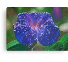 Deep Purple Morning Glory With Morning Dew Canvas Print
