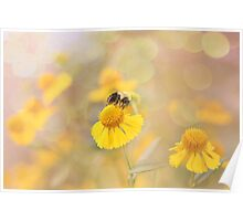 Helenium And Little Bee Poster