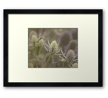 Sea Holly: Eryngium Lavender and white thistle like flowers Framed Print