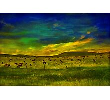 Cows In the Pasture Photographic Print