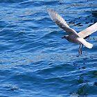 Seattle Seagull by Tori Snow