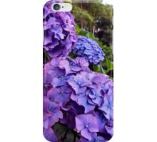 Purple Hydrangea iPhone Case/Skin
