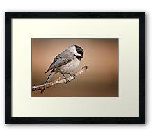 Carolina Chickadee  Framed Print