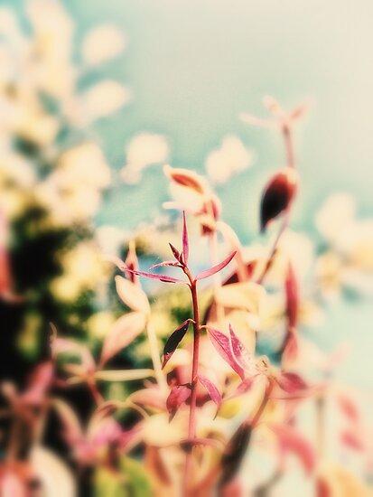 a beautiful mess by © Karin  Taylor