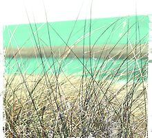 Seagrass by geophotographic